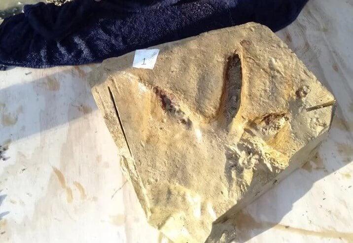 #фото | В Новой Зеландии найдены следы древней гигантской птицы без крыльев