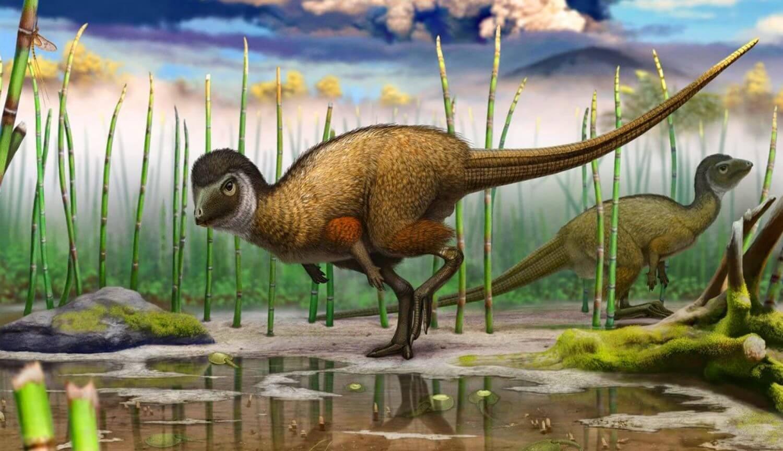 Перья появились раньше птиц и динозавров и не были предназначены для полетов