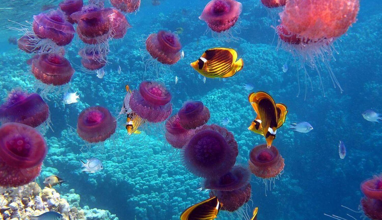 Какой вред получает организм после купания в океане?