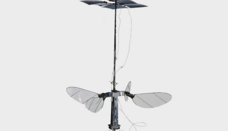 #видео | Самый легкий робот в виде насекомого работает на солнечной энергии