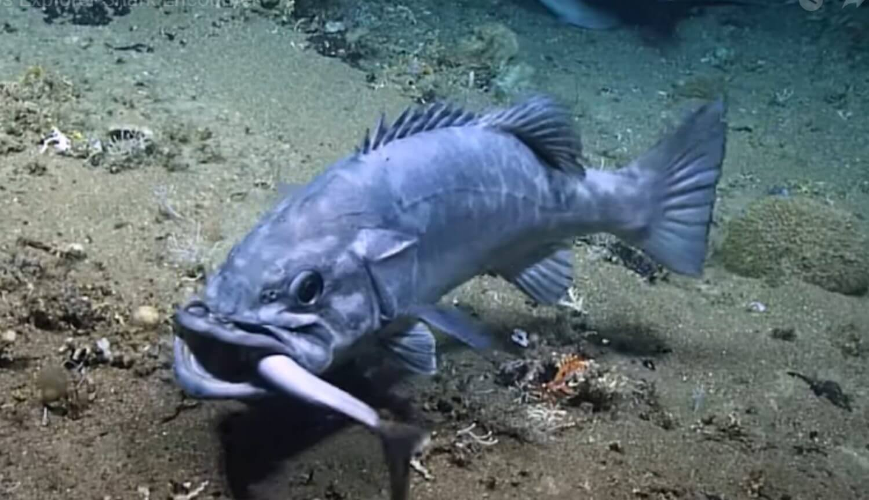 Может ли обычная рыба проглотить целую акулу?