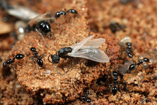 Из космоса виден огромный рой муравьев. Куда они летят?