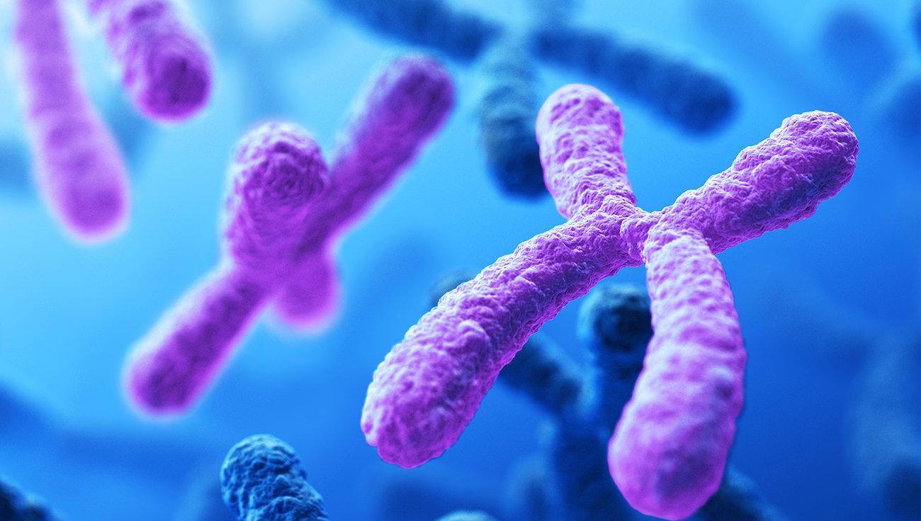 Почему у людей именно 23 пары хромосом?