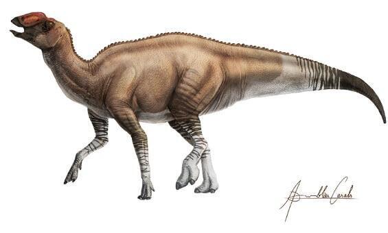 Ученые открыли нового динозавра. Он был похож на утку