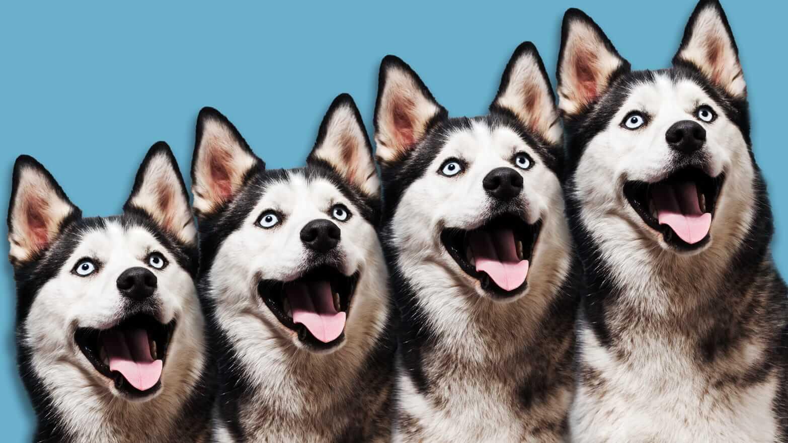 Сколько стоит клонирование кошки или собаки?