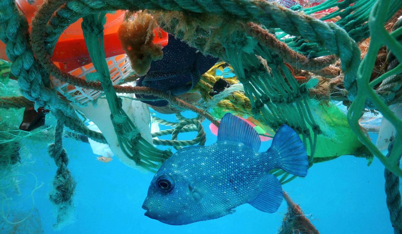 Ученые подсчитали, как сильно человечество загрязнило мировой океан