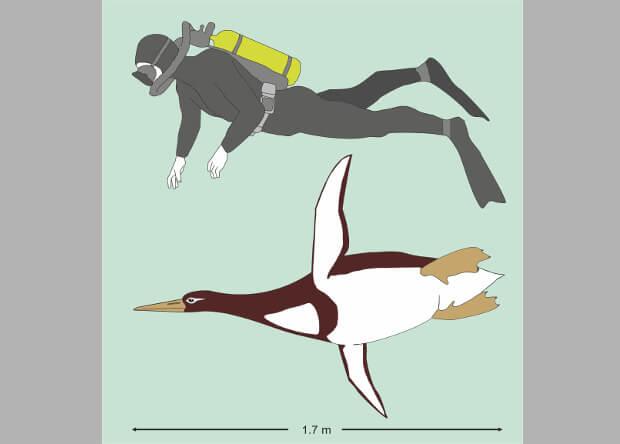 В Новой Зеландии нашли останки пингвина ростом с человека