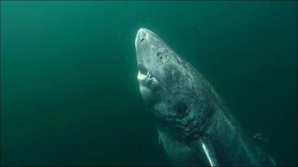 В Гренландии нашли акулу в возрасте 512 лет. Правда ли это?