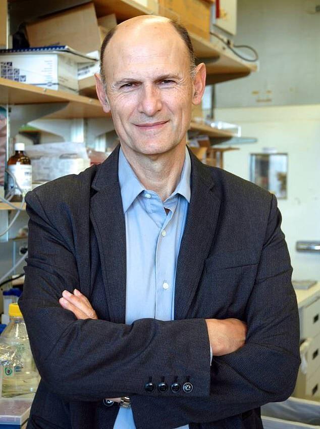Ученые вырастили первый в мире гибридный эмбрион обезьяны и человека