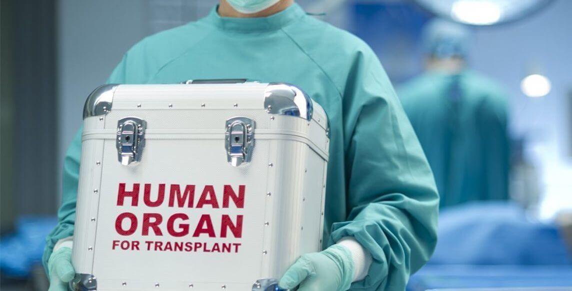Пересадка органов от животных человеку произойдет уже в этом году