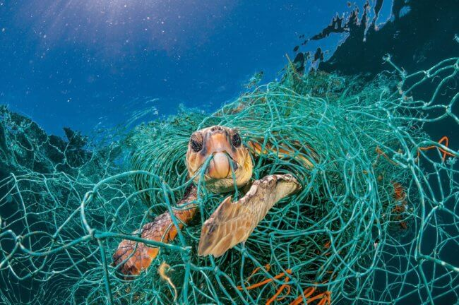 Черепахи начали питаться пластиком. Что с этим делать? | Hi-News.ru