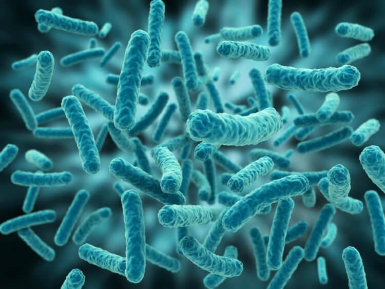 Кишечная бактерия может показать ваш истинный возраст