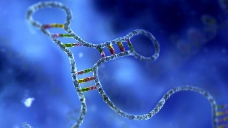 Древние вирусы могут победить рак