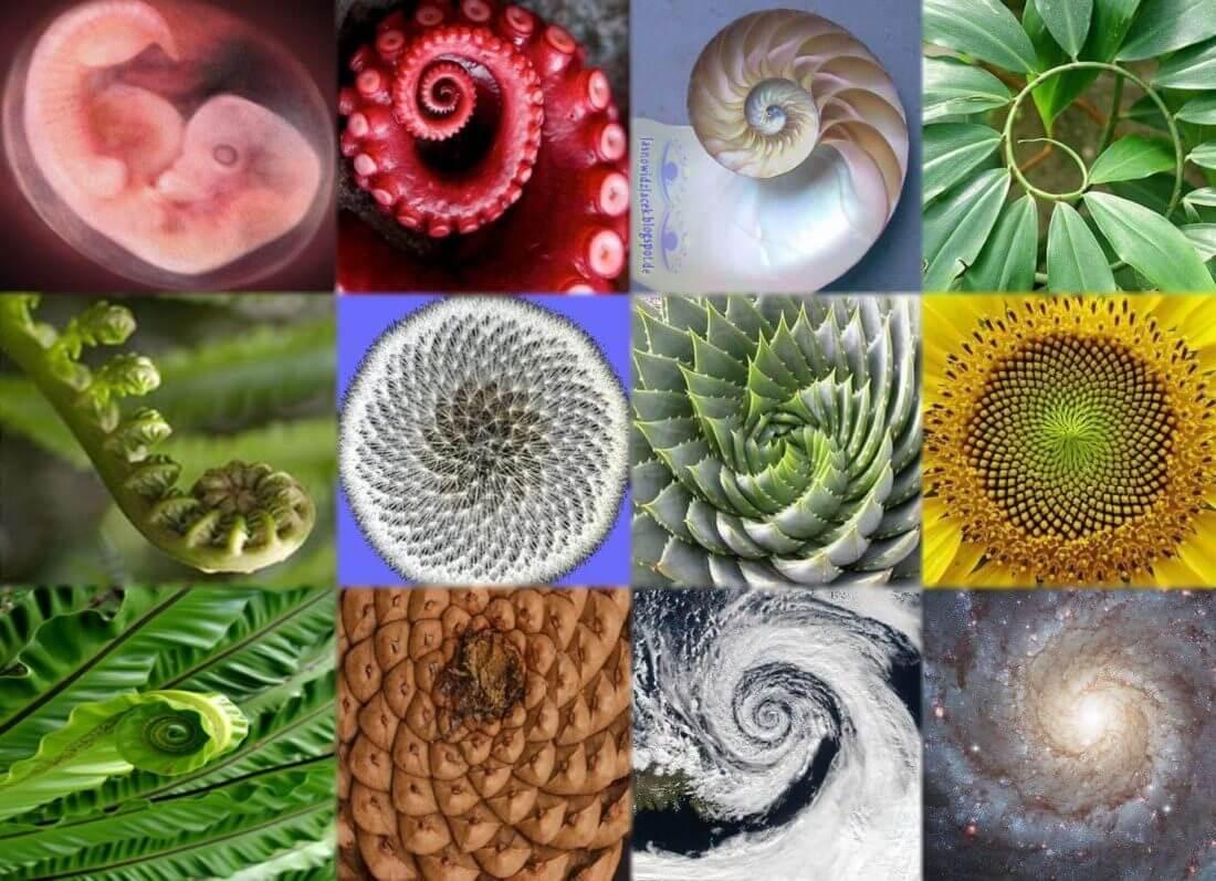 ακολουθία fibonacci στοιχημα