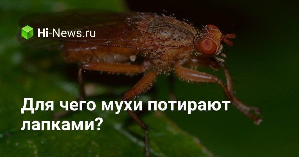 На что садятся мухи
