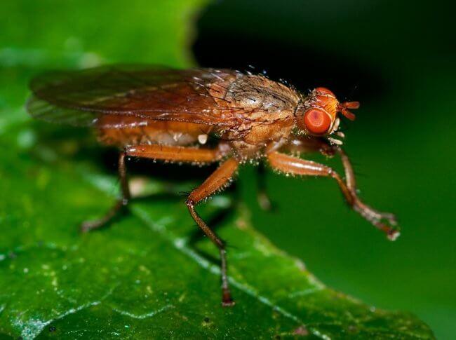 Для чего мухи потирают лапками? | Hi-News.ru