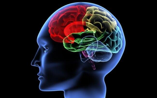 Что происходит в мозге, когда рождается мысль? | Hi-News.ru