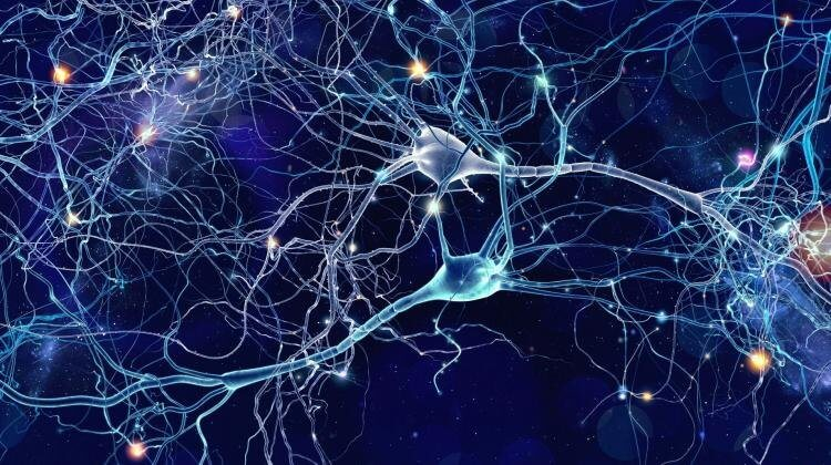 Ученые смогли создать искусственный мозг в лаборатории