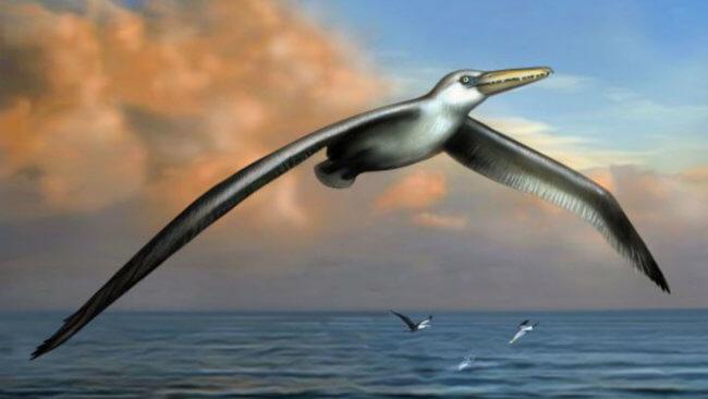 Найдены останки самой древней птицы в мире. О чем они могут рассказать? | Hi-News.ru