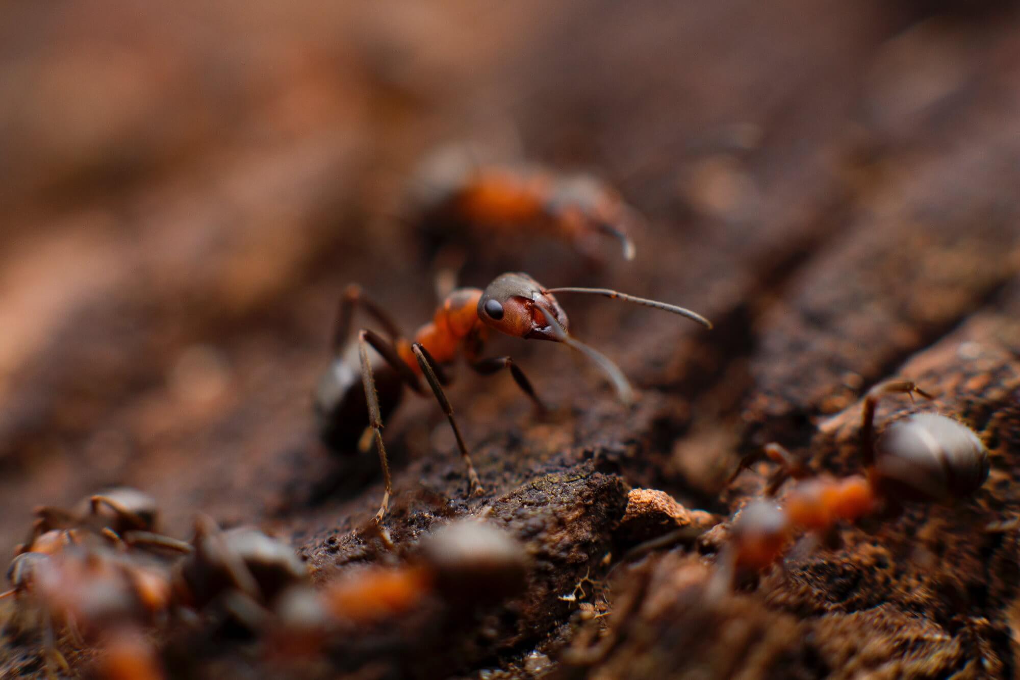 Какую скорость развивают самые быстрые муравьи в мире?