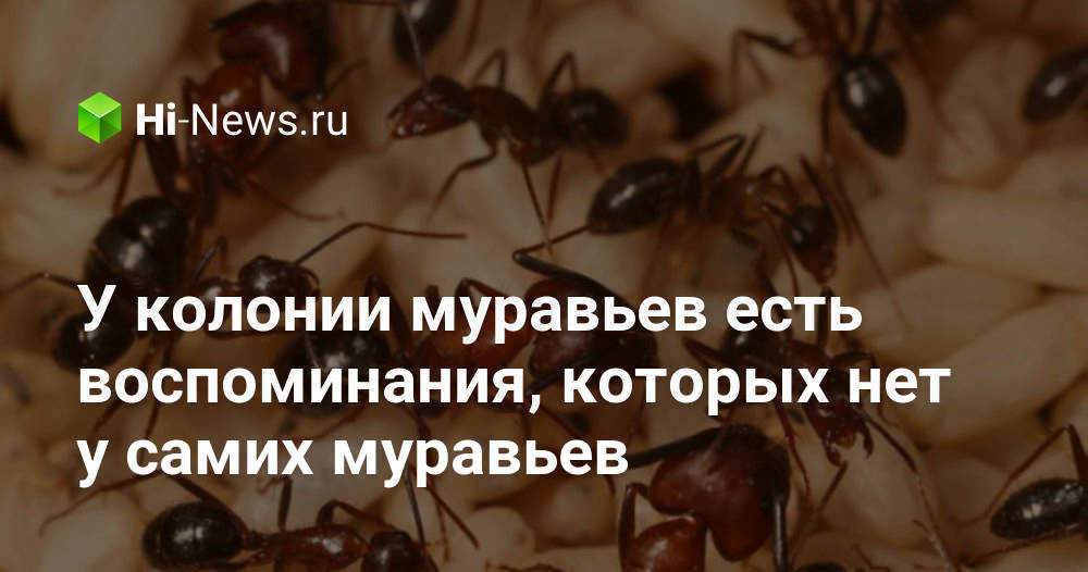 У колонии муравьев есть воспоминания, которых нет у самих муравьев