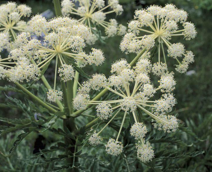 Виды растений и животных, к которым не следует прикасаться