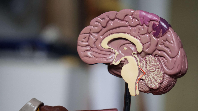Может ли мозг решать задачи во время сна?