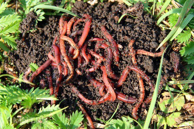 Может ли микропластик в почве привести к разрушению экосистемы? | Hi-News.ru