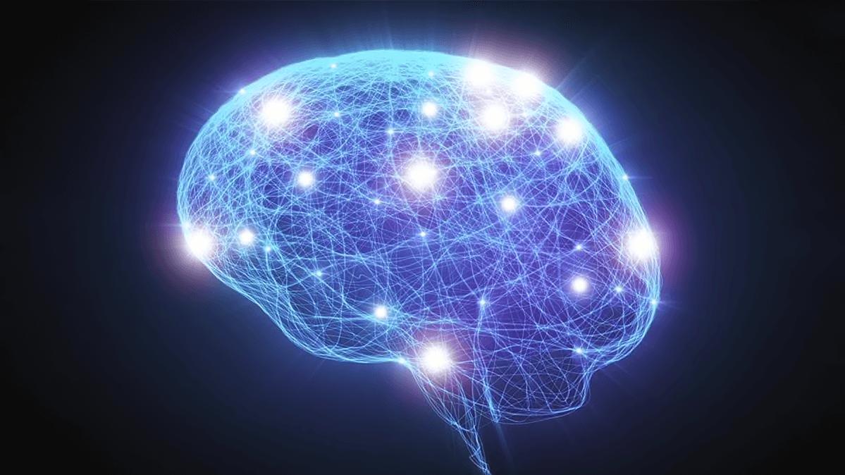 Ученые впервые сохранили ткани мозга живыми в течении нескольких недель