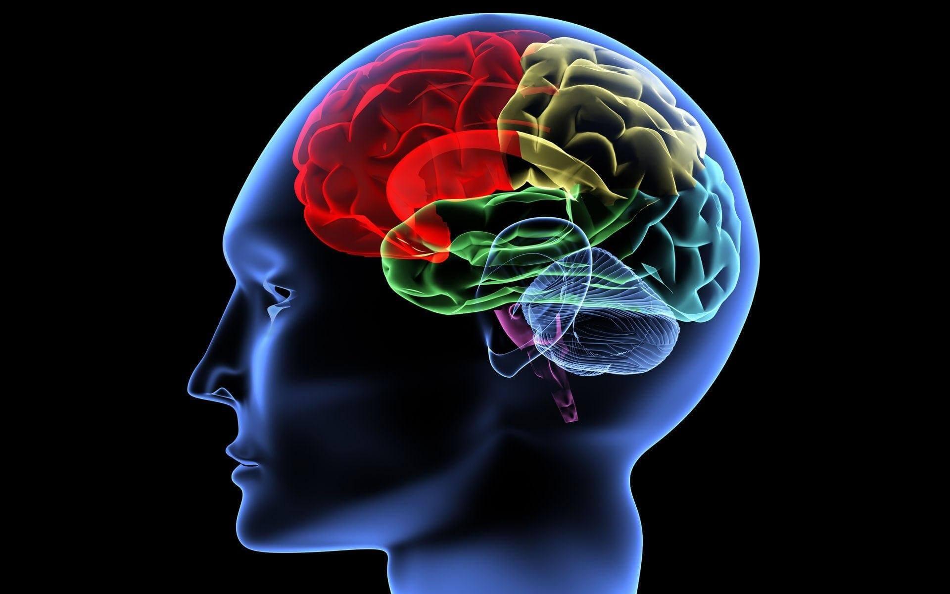 Излишняя активность работы мозга может значительно сократить продолжительность жизни