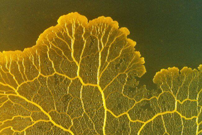 Загадочное существо без мозга может помочь ученым изучить механизм регенерации тканей | Hi-News.ru