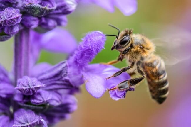 Как линии электропередач влияют на поведение пчел? | Hi-News.ru