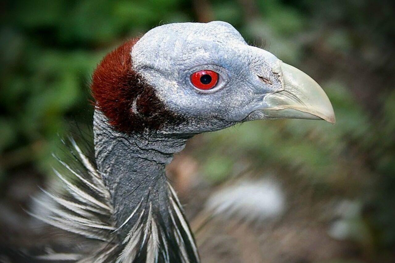 Птицы создают многоуровневое общество несмотря на крошечный мозг