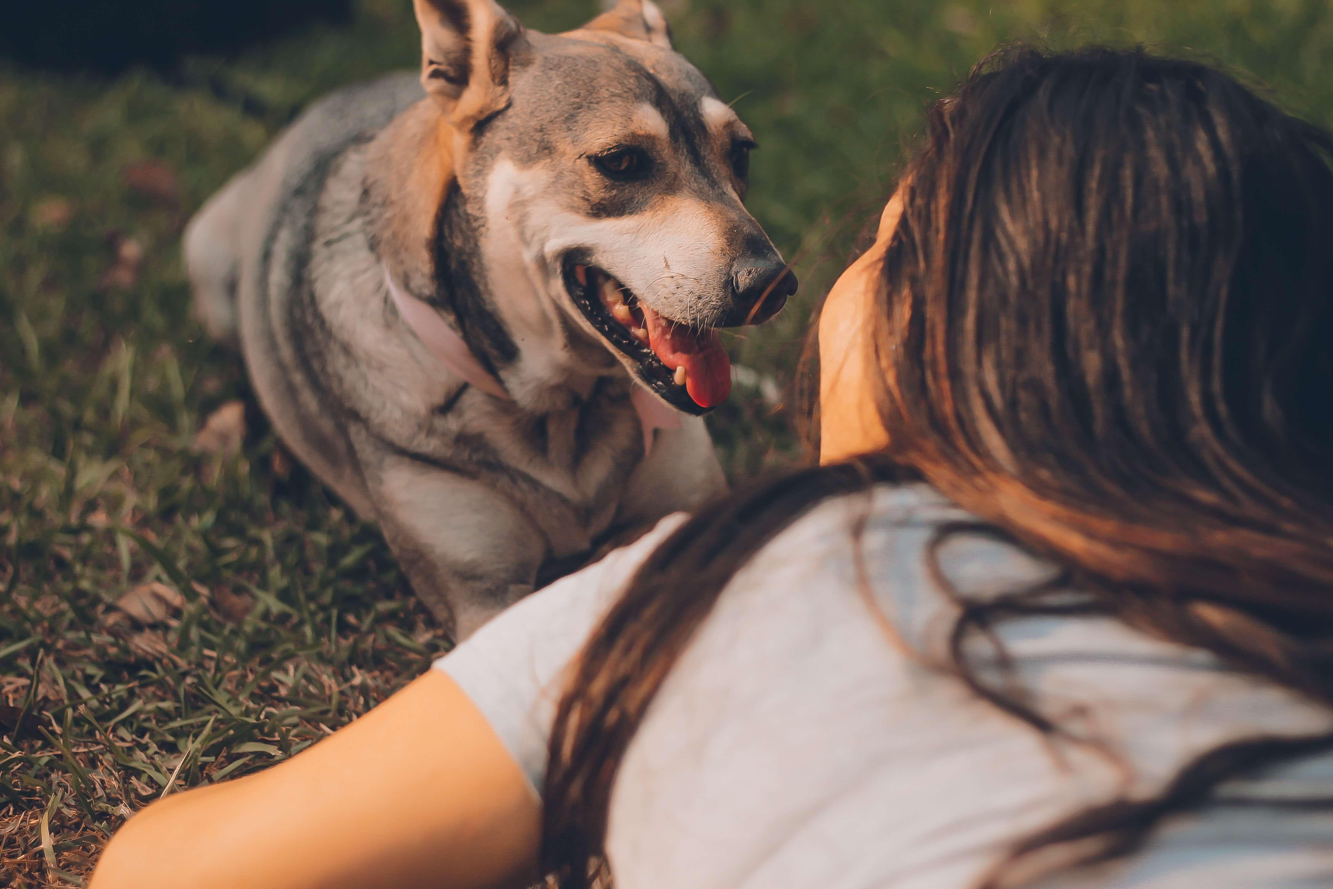 Какие люди лучше распознают эмоции собак?