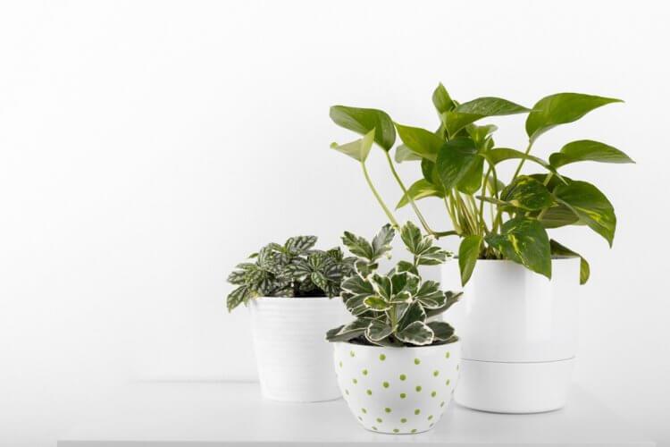 Растения в доме не очищают воздух - Hi-News.ru