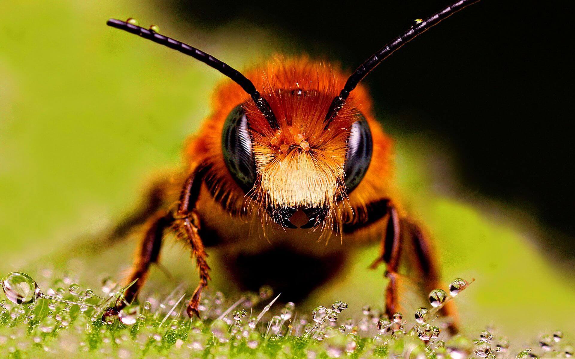 Почему пчелы умнее людей?