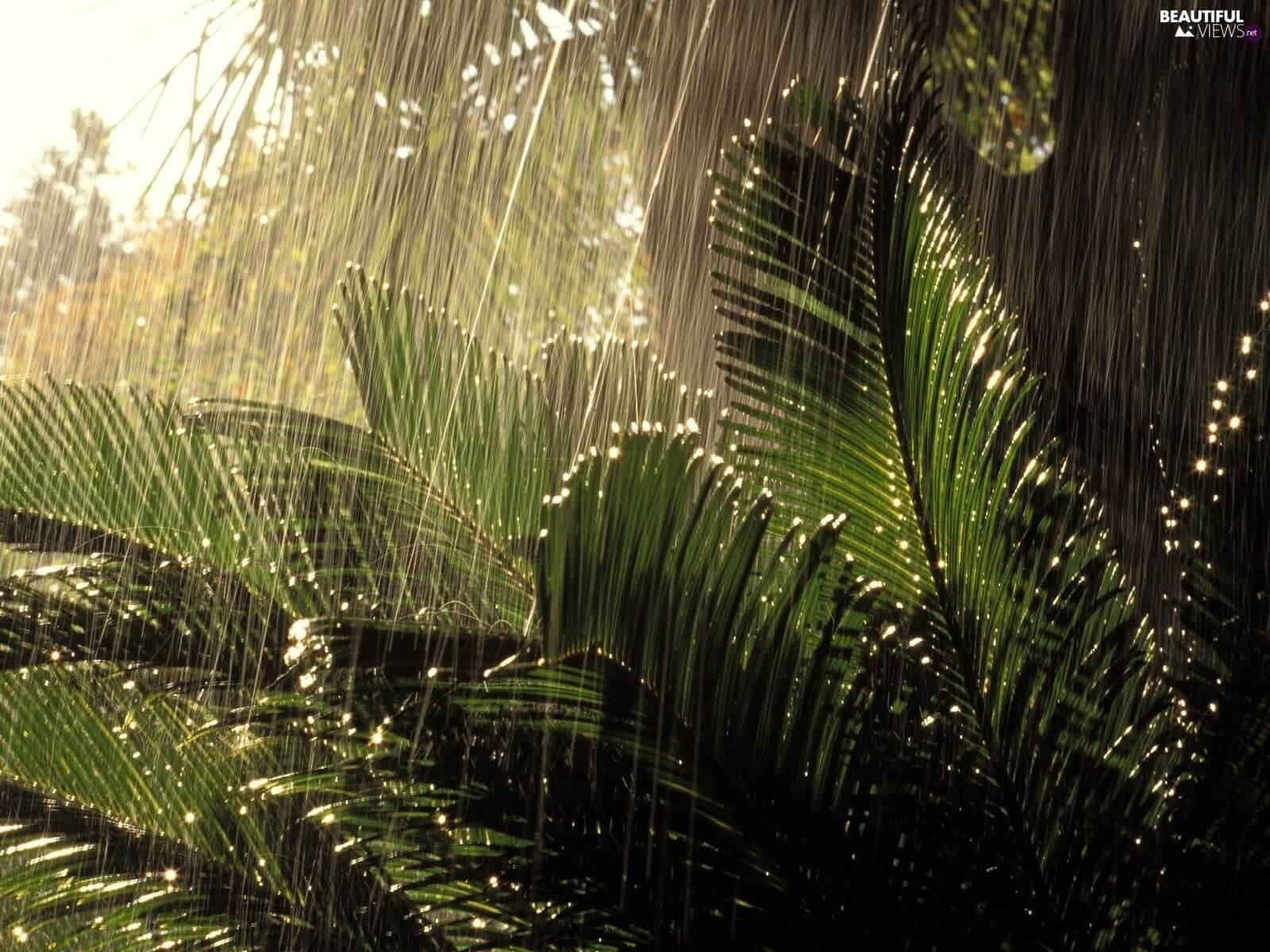 Когда идет дождь, растения находятся в состоянии, похожем на панику