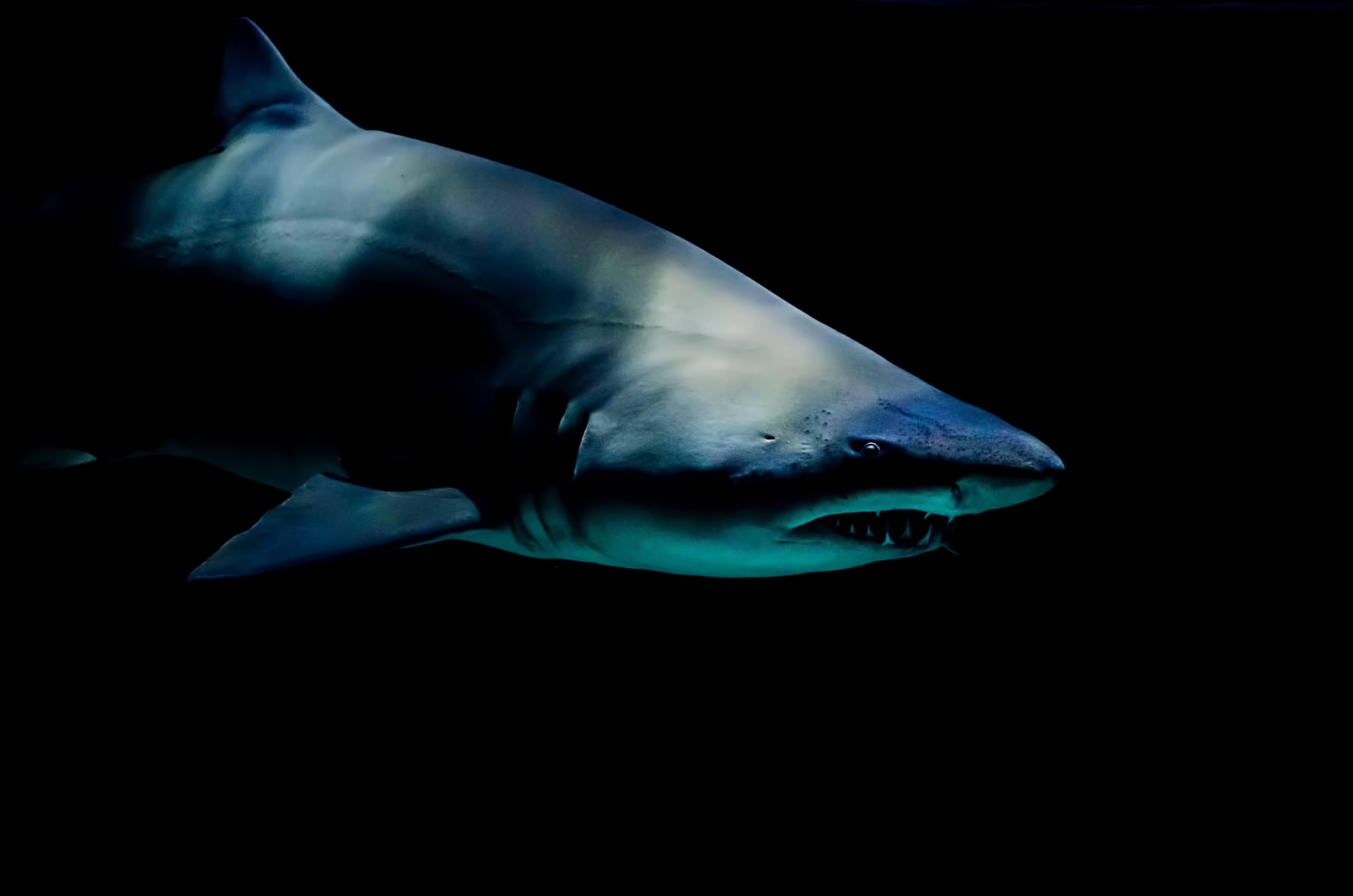 В Мексике найдены зубы самой страшной акулы в истории