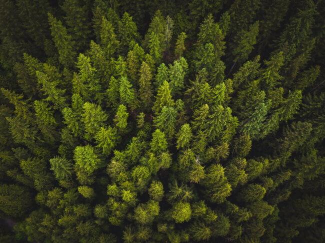 Деревья выделяют парниковые газы и могут ускорить глобальное потепление | Hi-News.ru