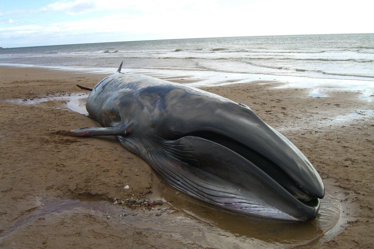 кит выбросился на берег картинка общайтесь