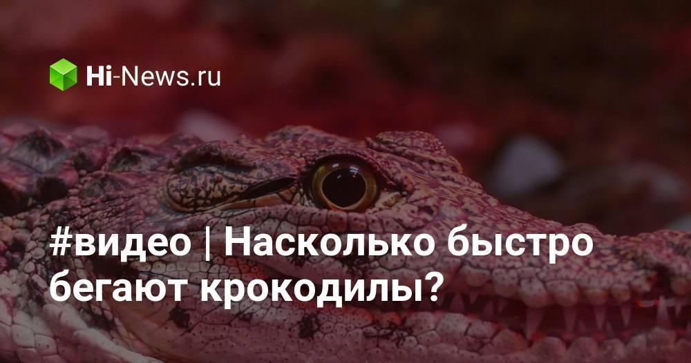 #видео | Насколько быстро бегают крокодилы?