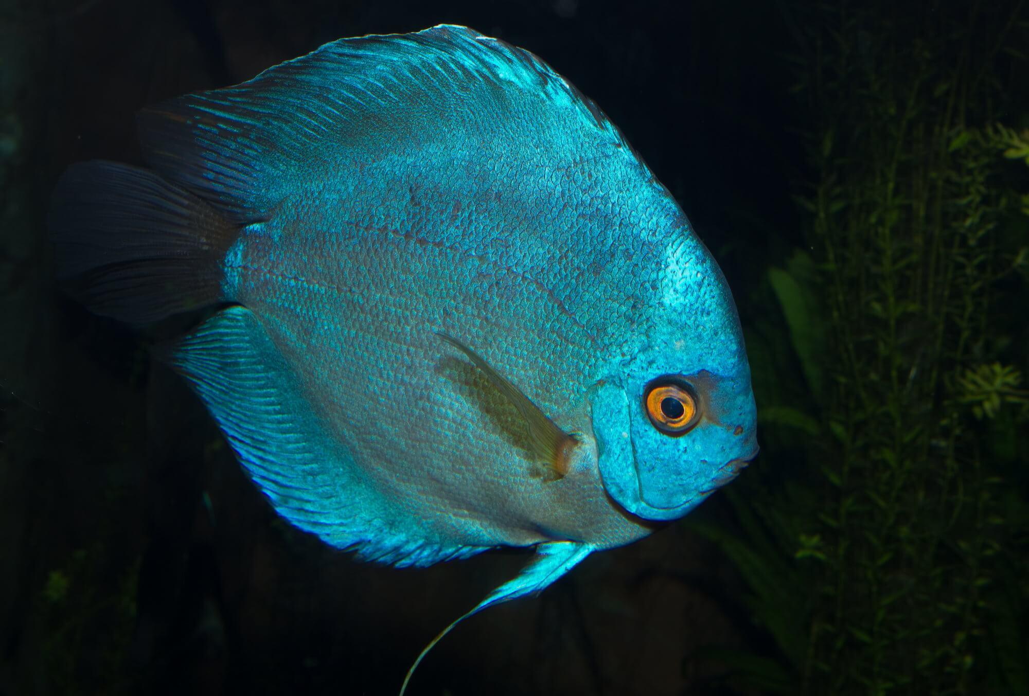 Почему в Африке так много разновидностей одних и тех же рыб?