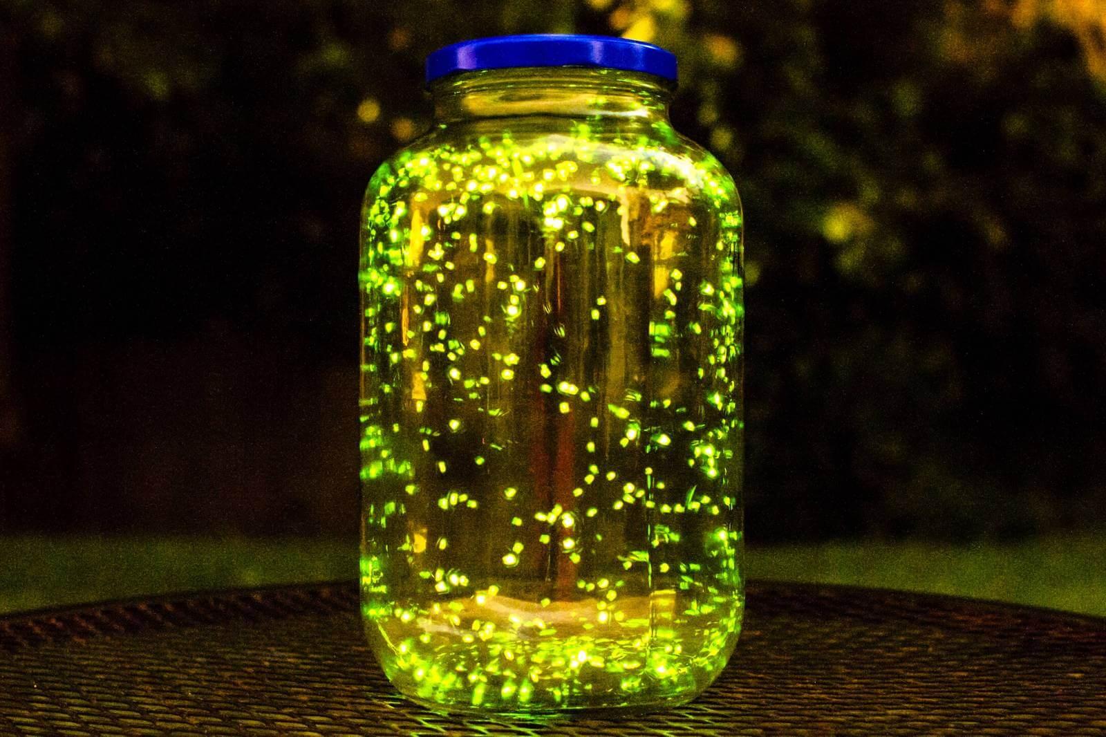 Экологи предупредили о возможном исчезновении светлячков