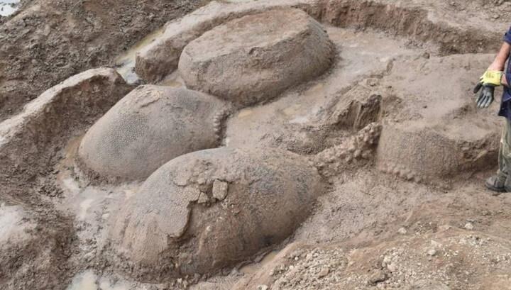 В Аргентине найдены останки предков броненосцев размером с автомобиль