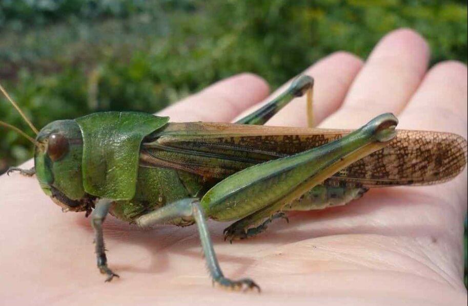 Созданы насекомые-киборги, способные искать взрывчатые вещества