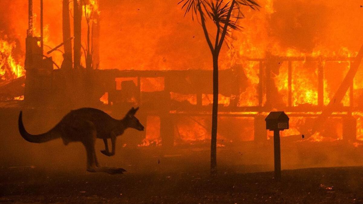 Могут ли восстановиться австралийские леса после пожаров?