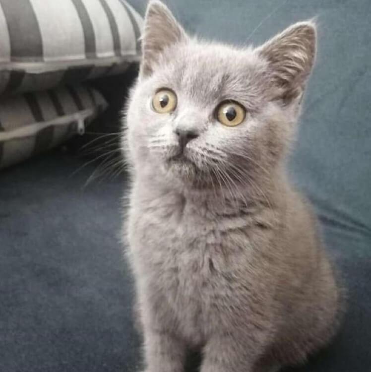 котенок носитель коронавируса