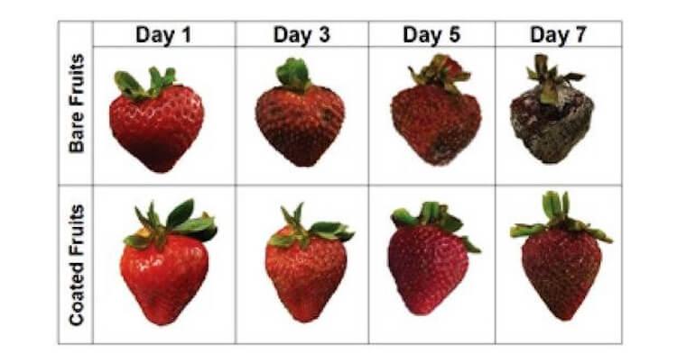 Найден способ продлить срок годности фруктов на неделю