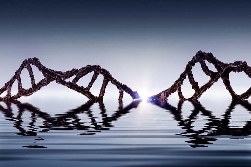 Жизнь на Земле могла появиться в результате гибрида молекул ДНК и РНК