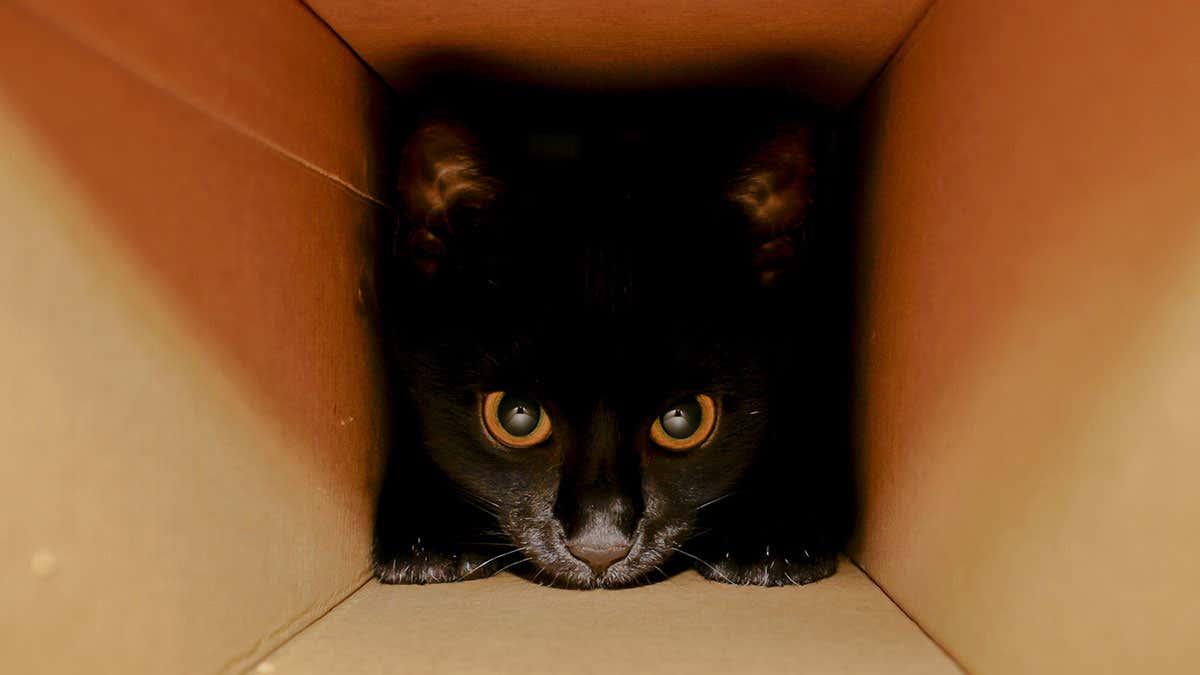 Физики придумали как спасти кота Шредингера